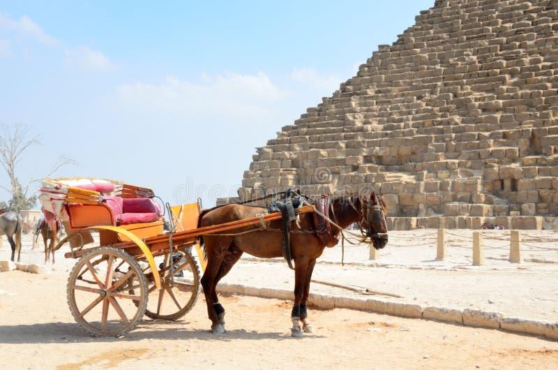 Konie rysujący frachty w Giza obraz royalty free