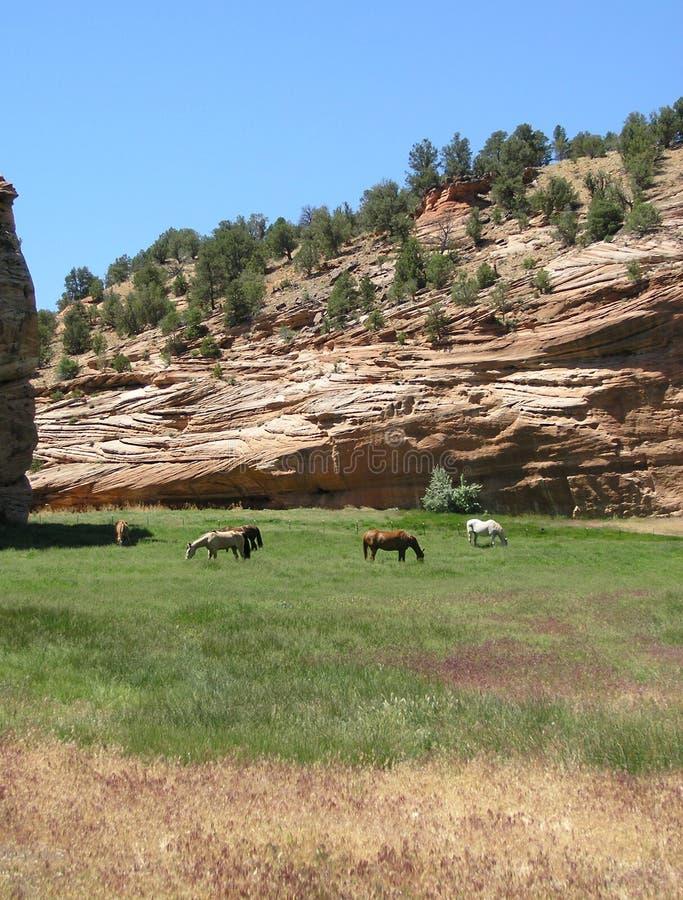 konie są pakowane Utah obraz royalty free