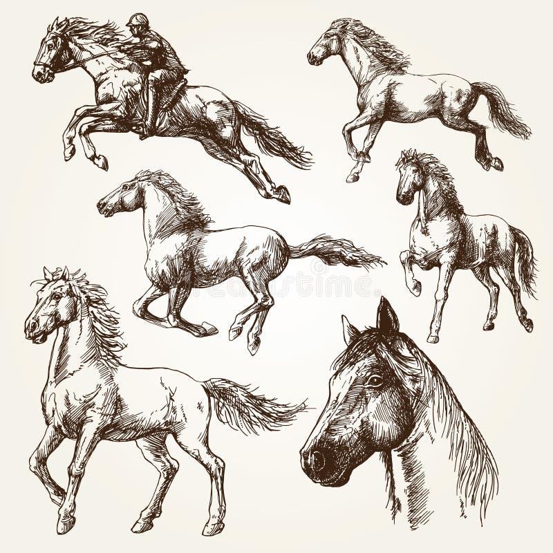 Konie Set rysunki ilustracja wektor