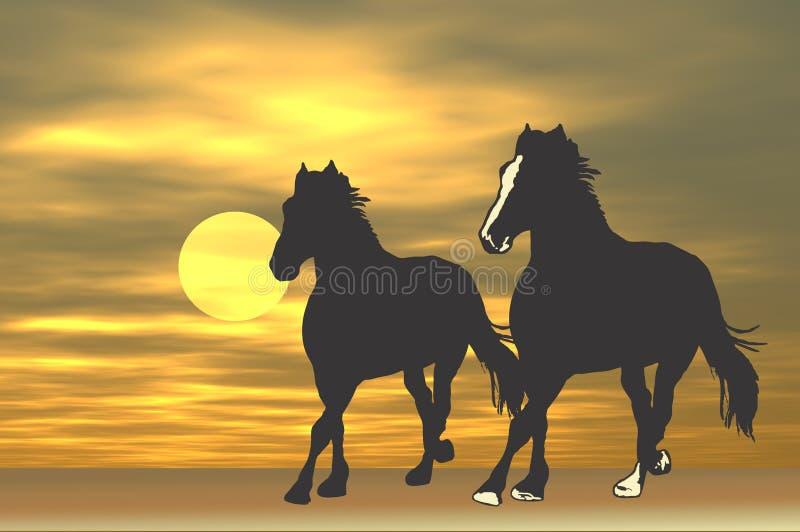 konie się wschód słońca