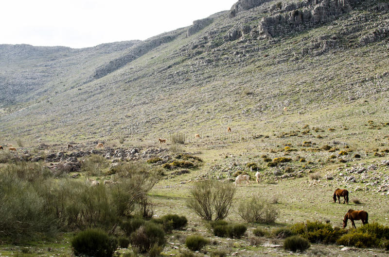 Konie w Andalusia obrazy royalty free