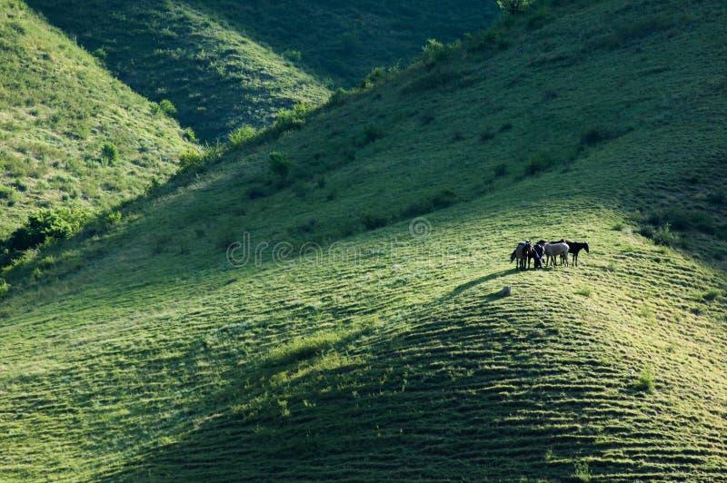 Konie w górach, equine, nag, hossa, kilof, dobbin zdjęcia royalty free