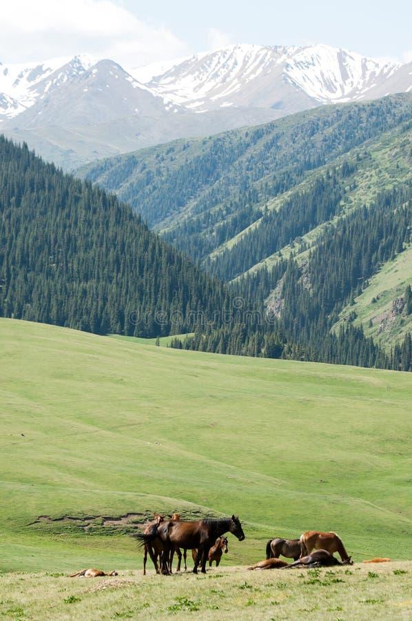 Konie w górach, equine, nag, hossa, kilof, dobbin obrazy royalty free