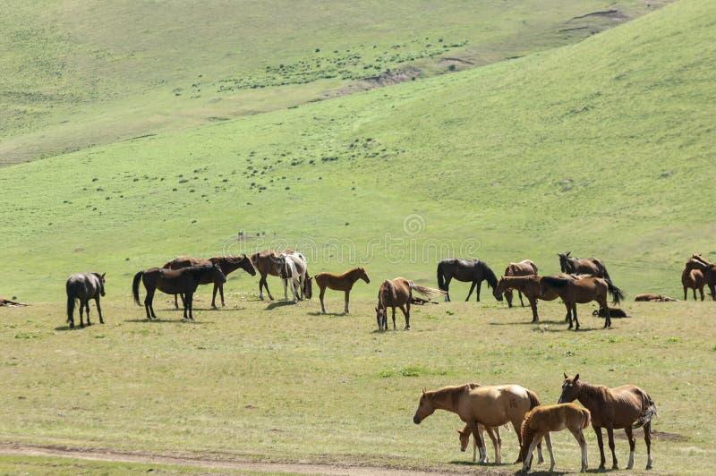 Konie w górach, equine, nag, hossa, kilof, dobbin fotografia royalty free