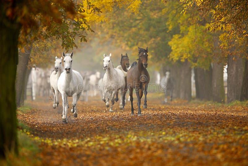 Konie w jesień fotografia stock