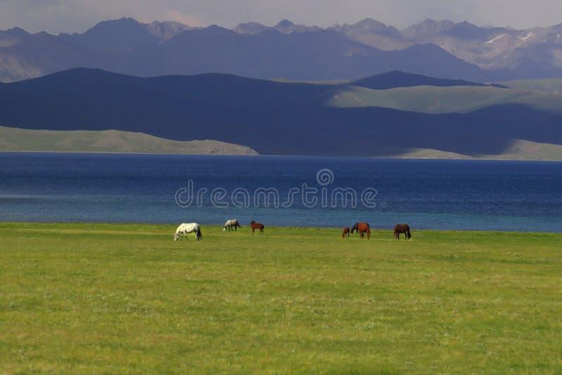 Konie w Kirgistan blisko Pieśniowego Kol jeziora zdjęcia stock