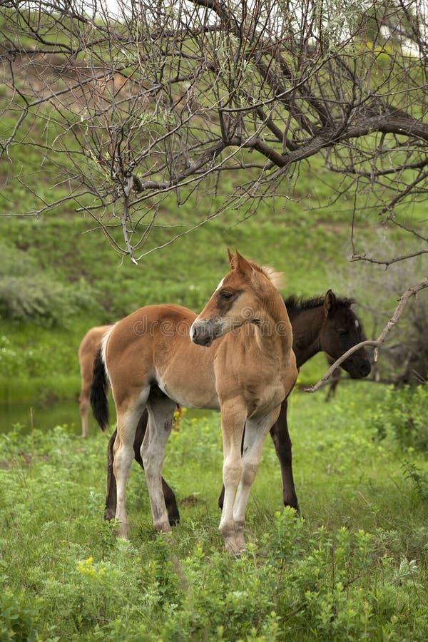 Konie w paśniku obraz royalty free