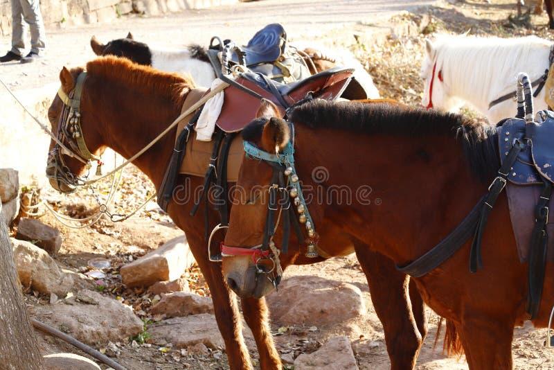 Konie wzd?u? Antycznej Herbacianej Ko?skiej drogi blisko wioski Shaxi, Yunnan, Chiny obrazy royalty free