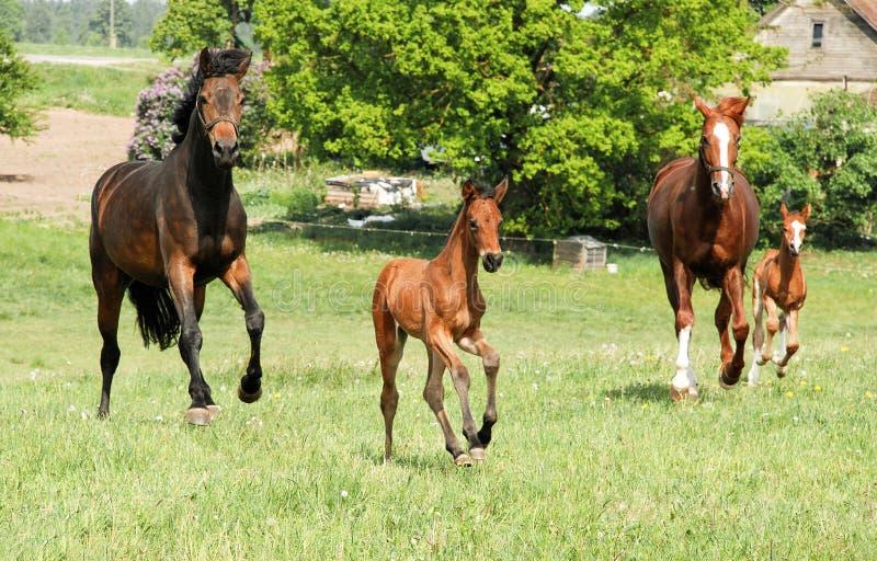 Konie z dzieci źrebiętami obraz royalty free