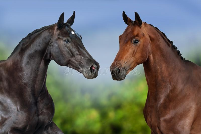 Konie zamykają up zdjęcia royalty free