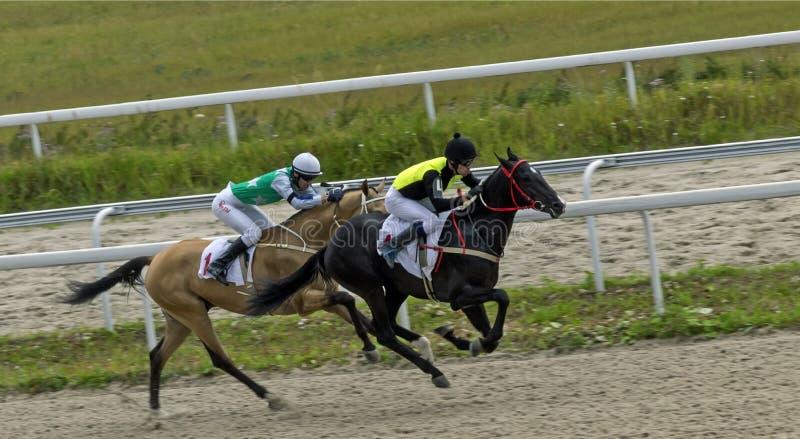 Koniec końska rasa w Pyatigorsk zdjęcie royalty free