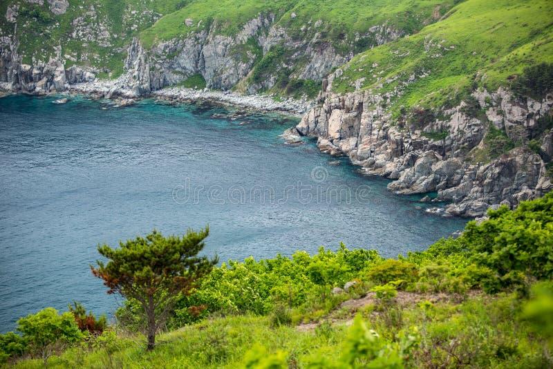 Koniferenbaum auf dem Hintergrund des Meeres und der Felsen stockbilder