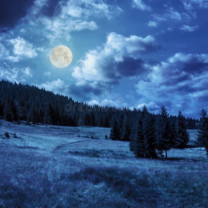 Koniferenwald auf einem Berghang in Mond linght stockbilder