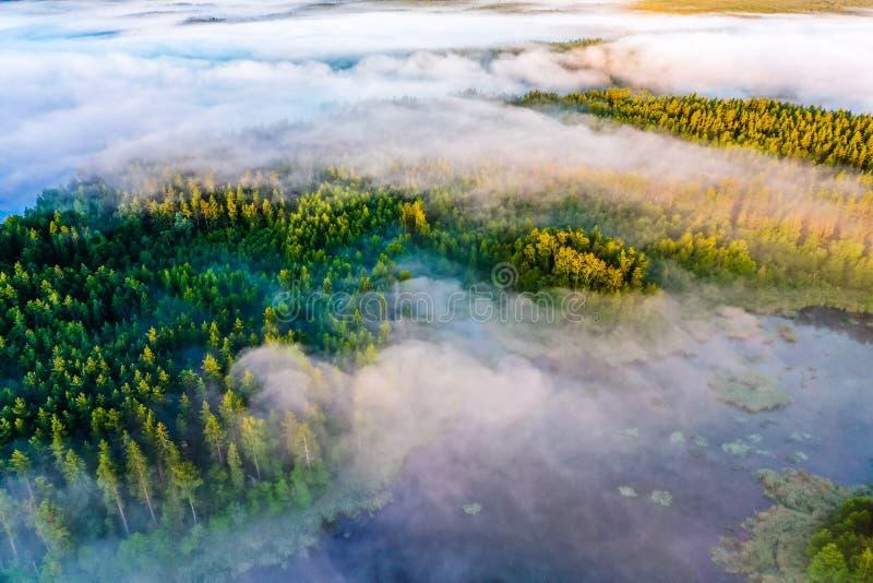 Koniferenwald umgeben durch blaue Seen, Luftlandschaft Luftlandschaft Sch?ner Morgen stockfotos