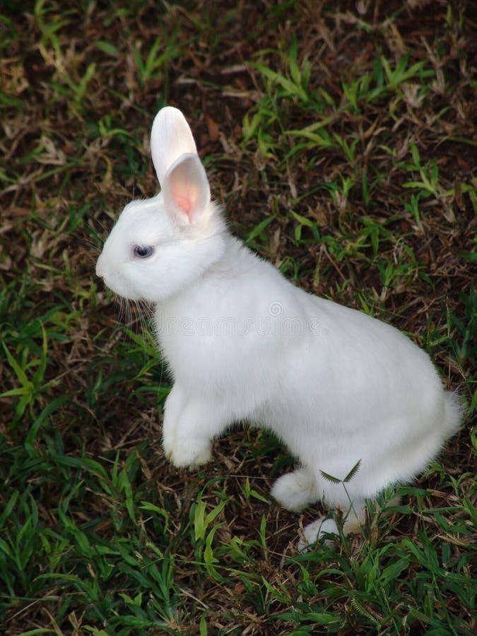 konijn stock foto's