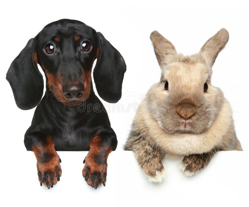 Konijn en hond. Het portret van de close-up stock foto's