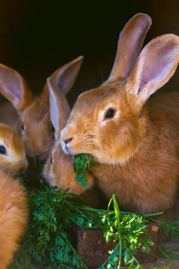 Konijn en kleine konijnen stock foto