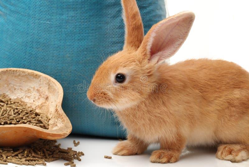 Konijn en konijnvoer royalty-vrije stock fotografie