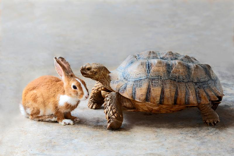 Konijn en schildpad royalty-vrije stock fotografie