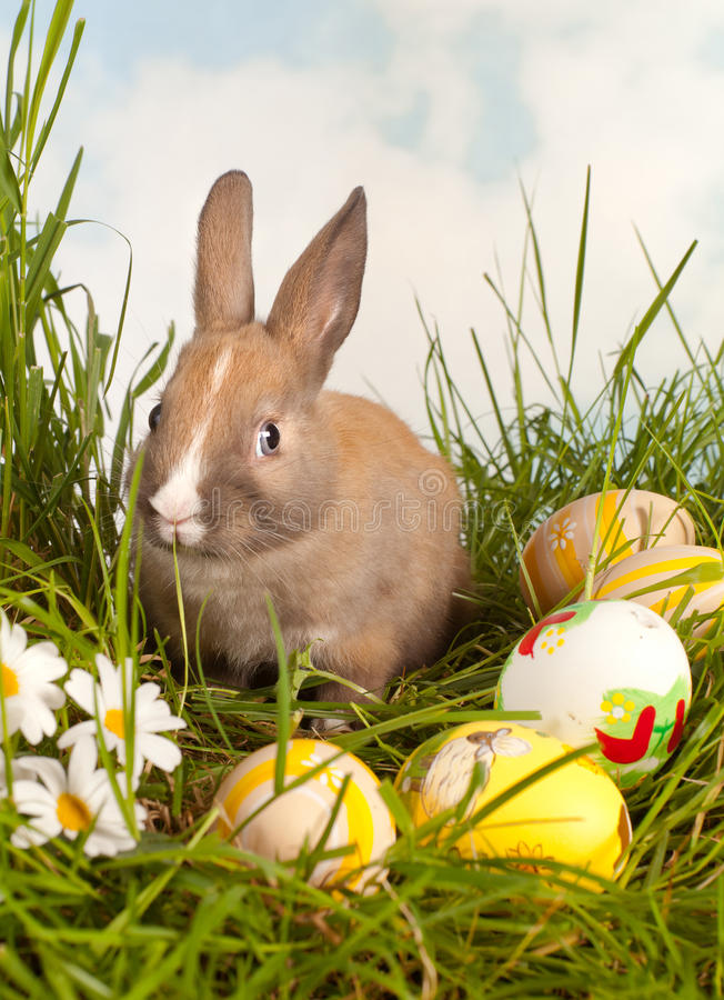 Konijn in Pasen stock fotografie
