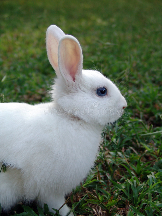 konijn wit stock afbeelding