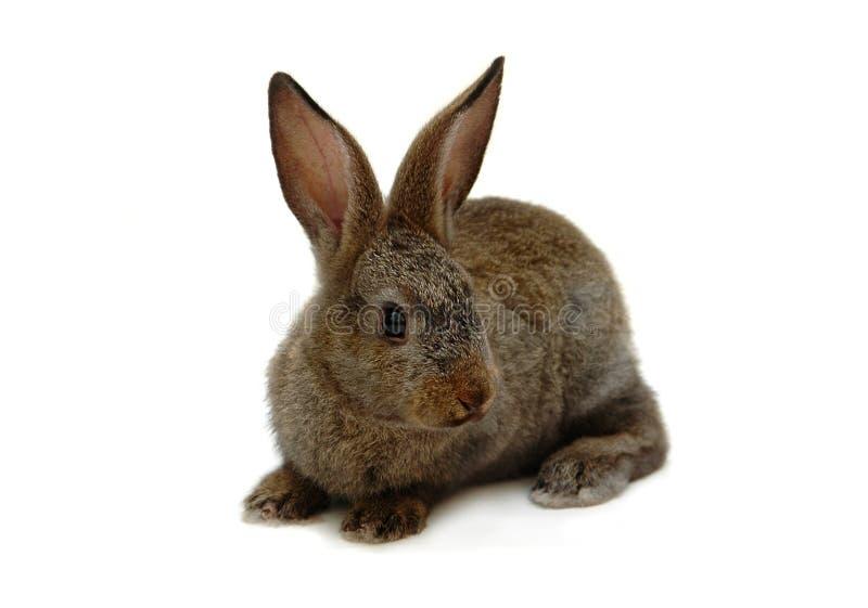 Download Konijntje stock afbeelding. Afbeelding bestaande uit konijn - 284071