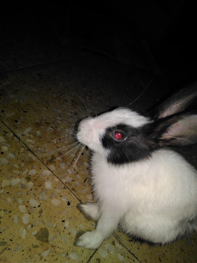 konijntje stock foto's