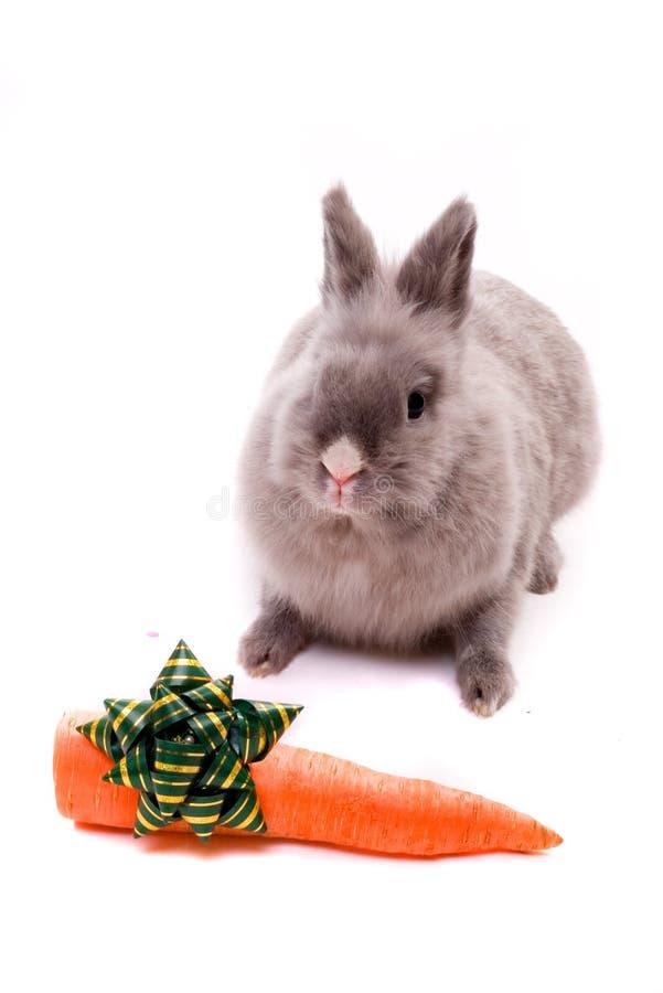 Konijntje met feestelijke wortel stock foto's