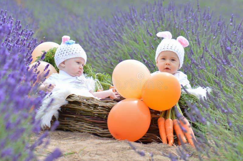 Konijntjesbabys in lavendel royalty-vrije stock foto's