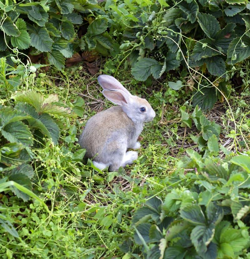Konijnzitting in het Gras stock fotografie