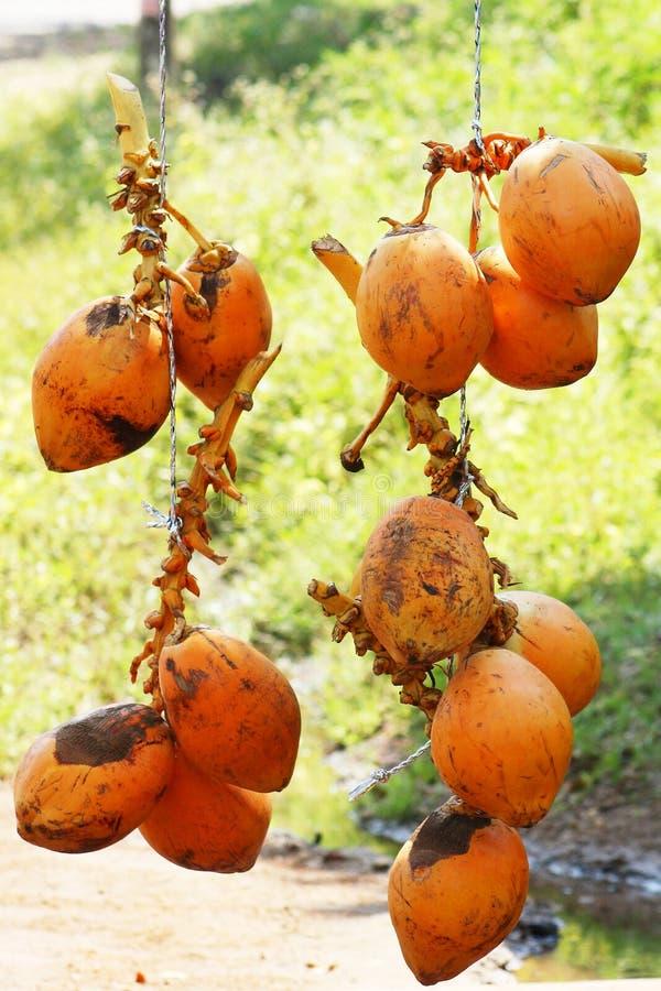 Koning Coconuts (Thembili) op de weg Sri Lanka royalty-vrije stock foto