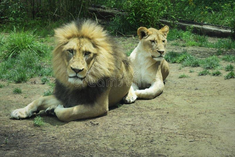 Koning en zijn Koningin stock afbeeldingen
