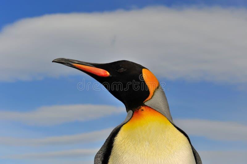 Koning Penguin in Zuid-Georgië royalty-vrije stock afbeeldingen