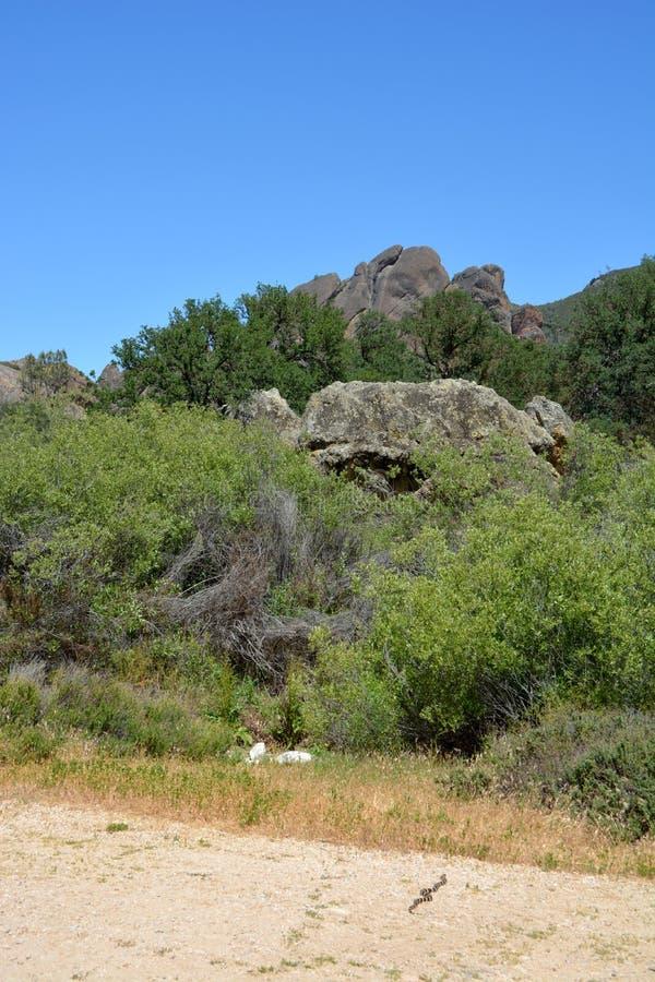 Koning Snake van Californië van het toppen de nationale park stock afbeelding