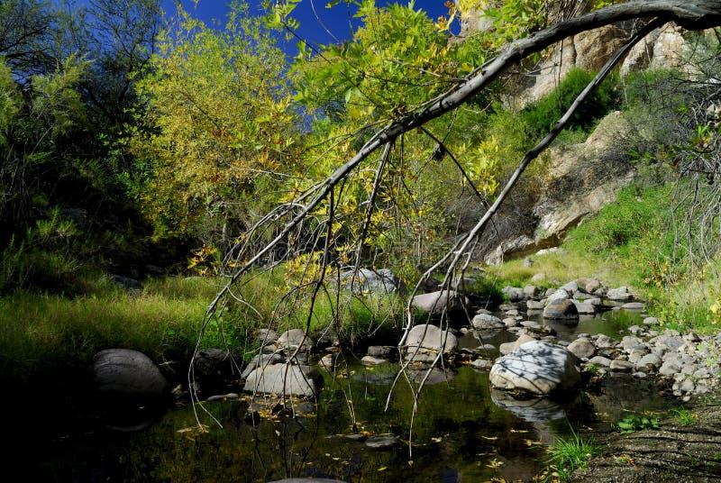 Koningin Creek royalty-vrije stock afbeeldingen