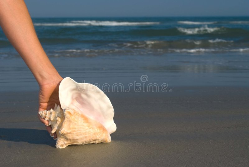 Koningin in hand Conch stock foto