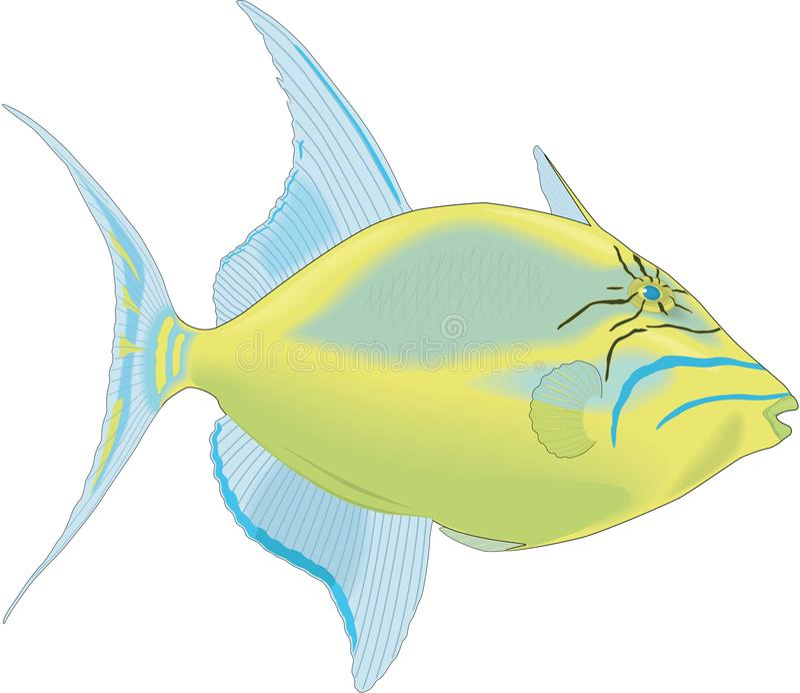 Koningin Triggerfish Illustration vector illustratie