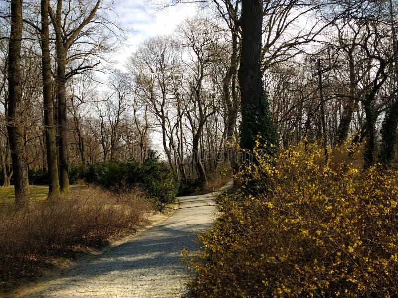 Koninklijk park zonnige ochtend Warschau Polen royalty-vrije stock afbeelding
