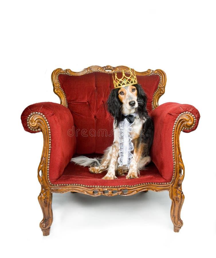 Koninklijke hond stock afbeeldingen