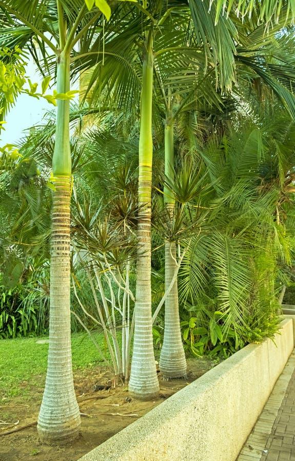 Koninklijke Palm in een hoek van een tropische tuin in de stad van Holon Israël royalty-vrije stock foto