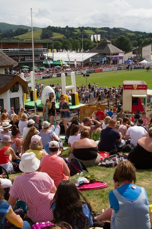 Koninklijke Welsh Show-cob-hengstenwedstrijd stock foto