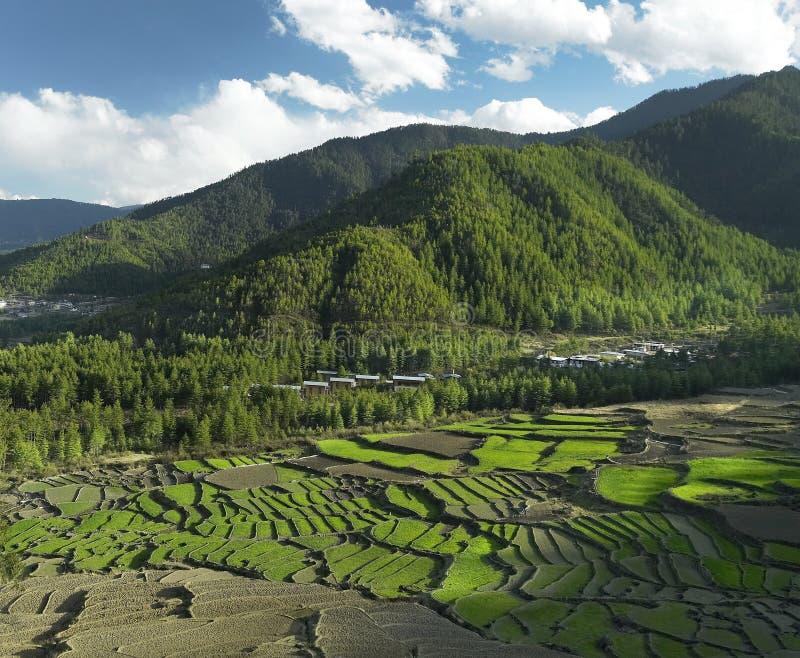 Koninkrijk van Bhutan - de Gebieden van de Padie stock afbeeldingen