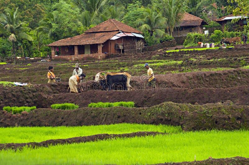 KONKAN, MAHARASHTRA die, INDIA, Juni 2012, Landbouwers in landbouwbedrijf tijdens moessonseizoen werken royalty-vrije stock afbeelding