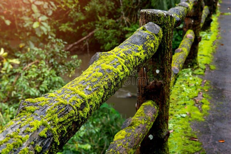 Konkret staketstolpebro med mossa royaltyfri fotografi