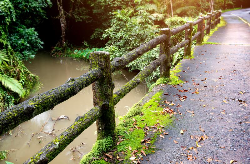 Konkret staketstolpebro med mossa royaltyfri foto
