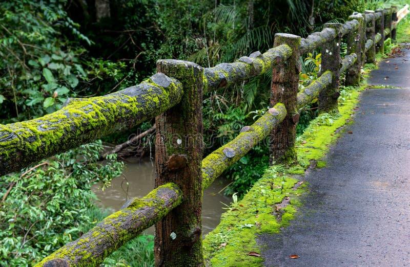 Konkret staketstolpebro med mossa fotografering för bildbyråer