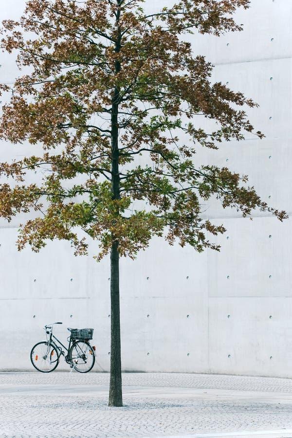konkret tree arkivbild