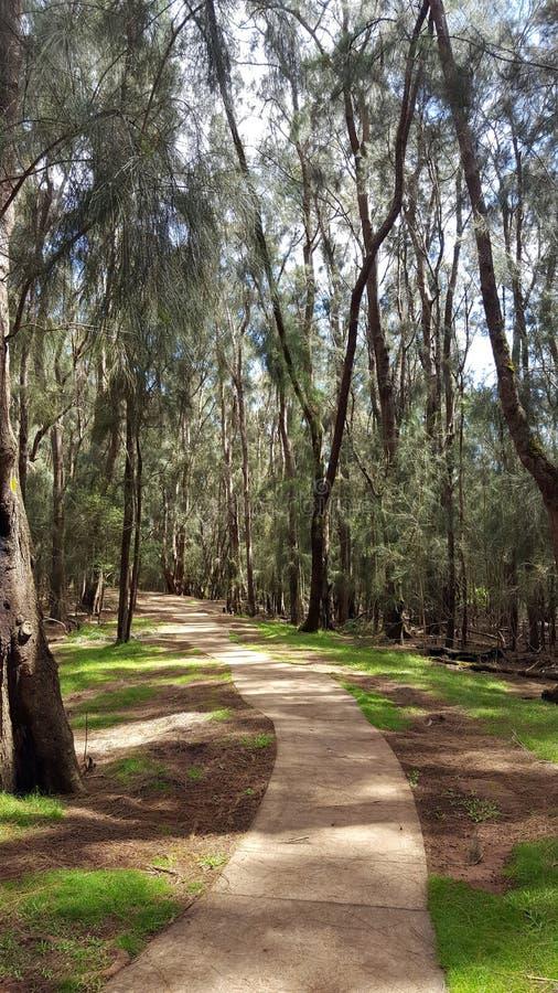 Konkrete Bahn im Wald von Ironwoodbäumen lizenzfreie stockfotos