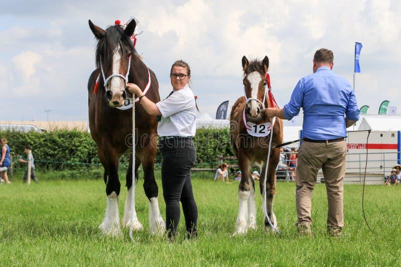 konkurenci pokazuje ich konie przy przedstawieniem obraz stock