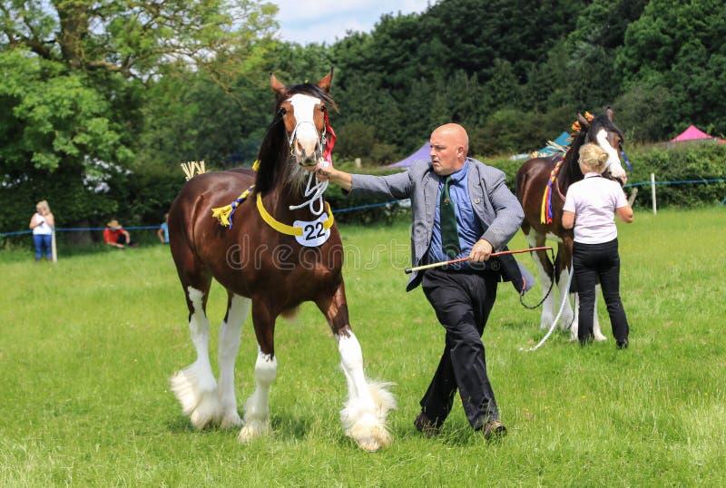 Konkurent pokazuje jego konia przy przedstawieniem obrazy royalty free